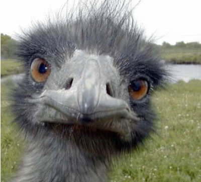 Accountants, ostriches and the insane