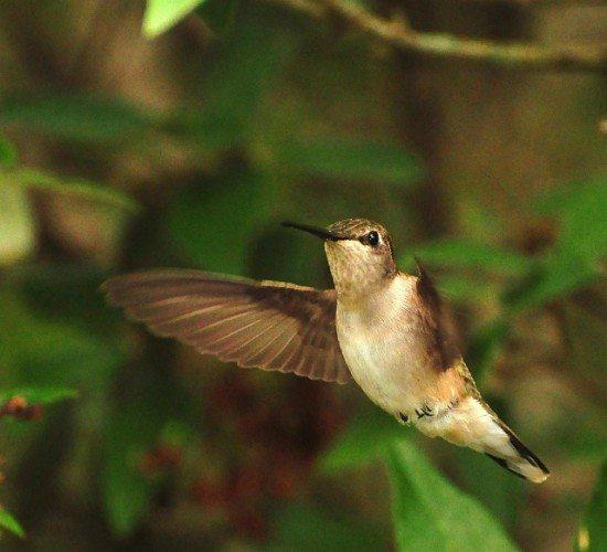 Hummingbird Ventures closes ?30m VC fund