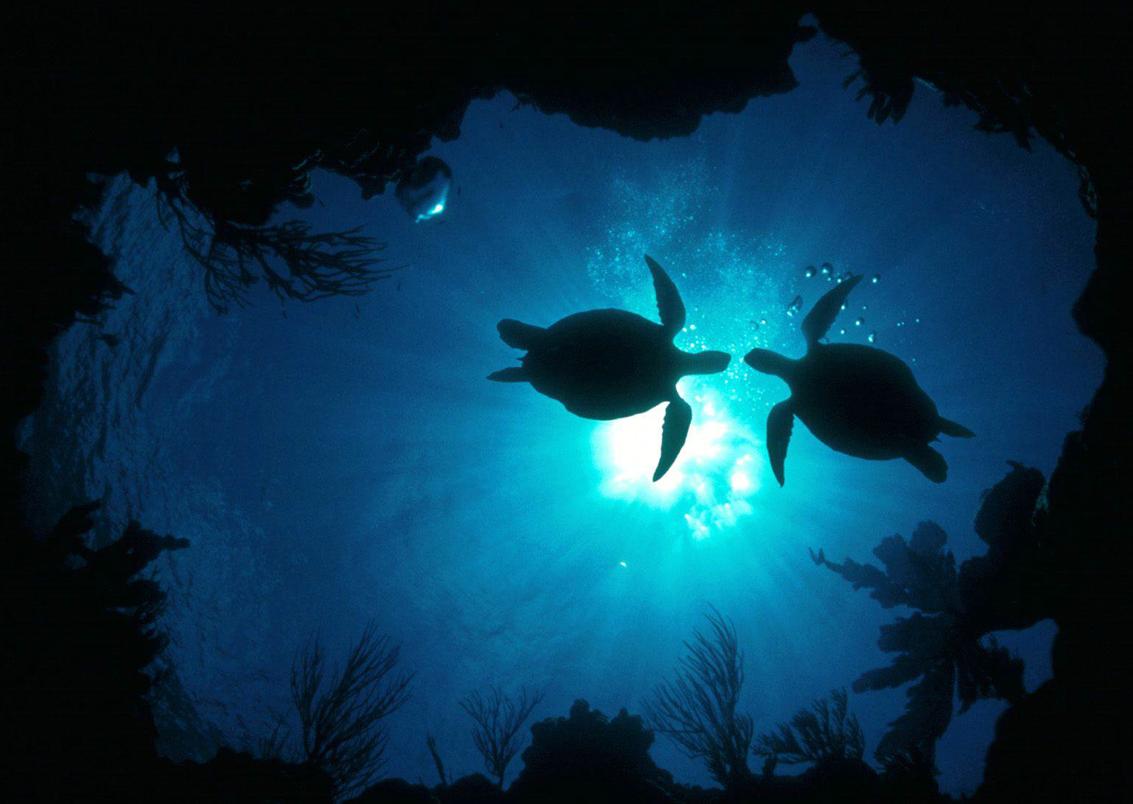 "Meet China's ""Sea Turtles"""