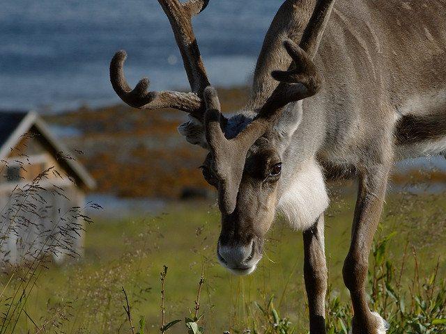 Rudolph and Prancer talk Christmas politics