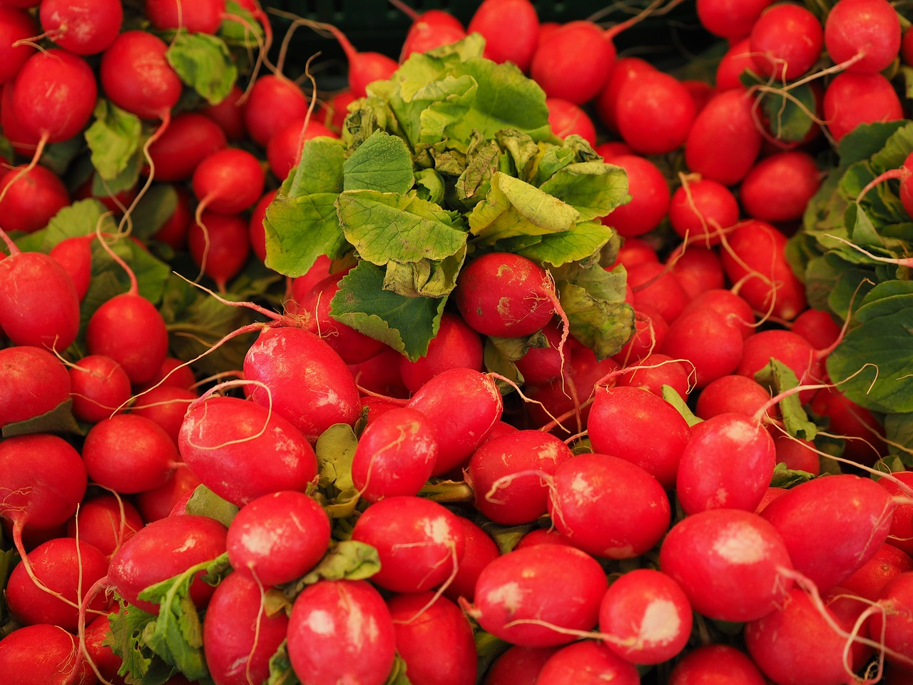 How a radish can save your business
