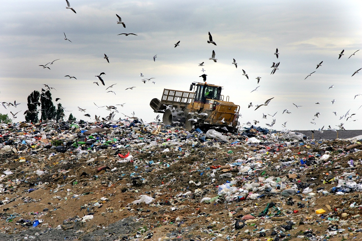 Rubbish! Majority of British SMEs confused about disposal of waste