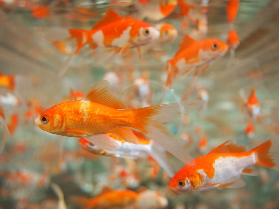 We have an attention span worse than goldfish – and it's improving our creativity