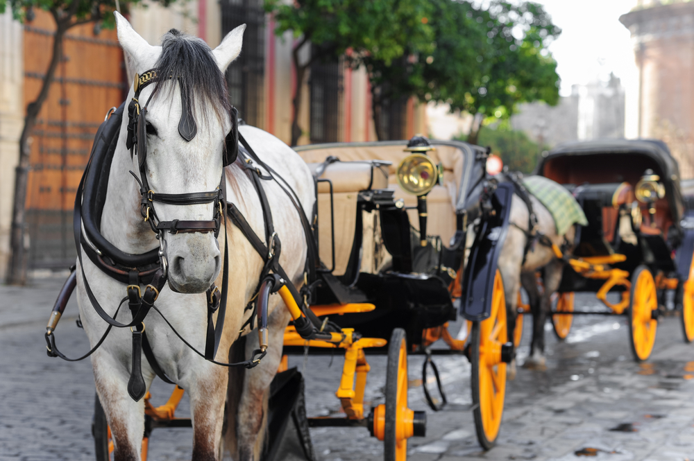 ECB drives coach and horses through State Aid Rules. So should we