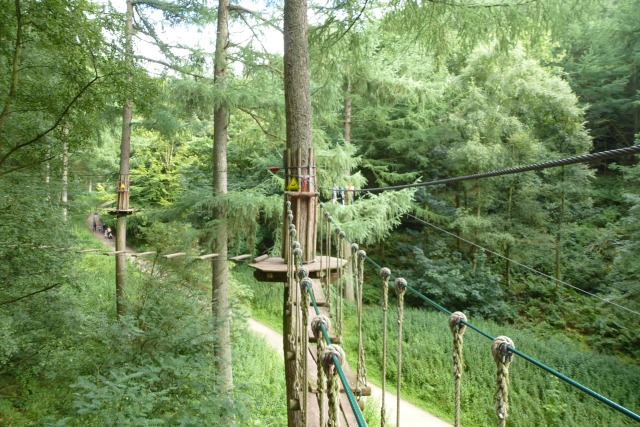 Go Ape swing to success: A tale of evolution, the great outdoors and family business