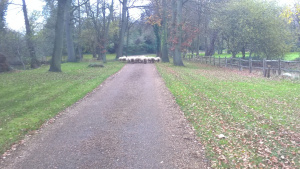 The Cloudview entrepreneur sent us a picture of his sheep