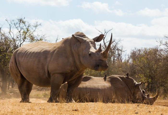Battling the stress of being an entrepreneur by caring for rhinos in Africa