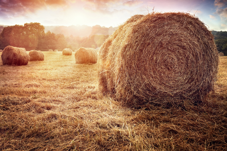 Resilient organisations make hay when the sun shines