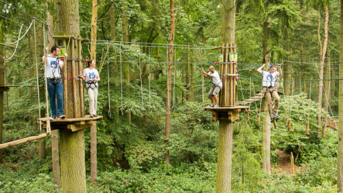 Go Ape with team building activities