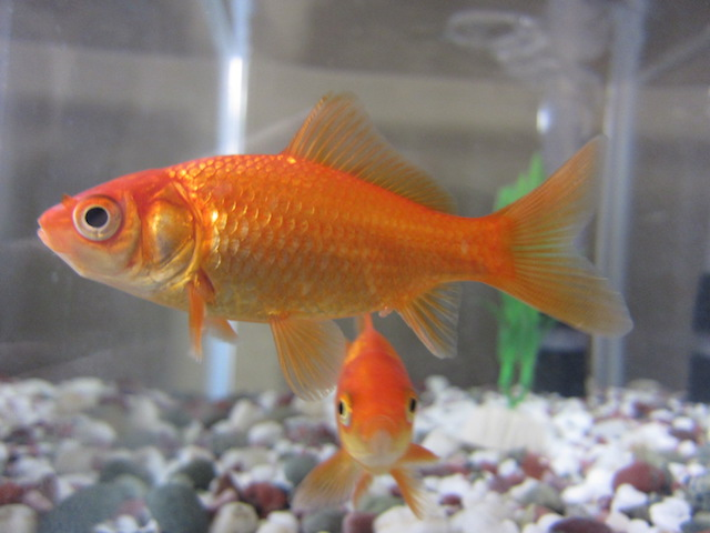 Customer experience in the age of the goldfish attention span