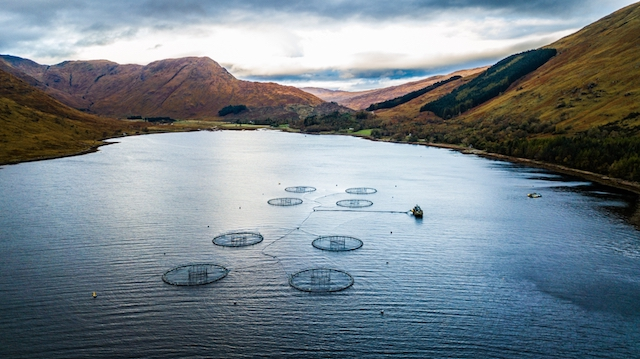 Will Brexit red tape choke Scotland's salmon industry?