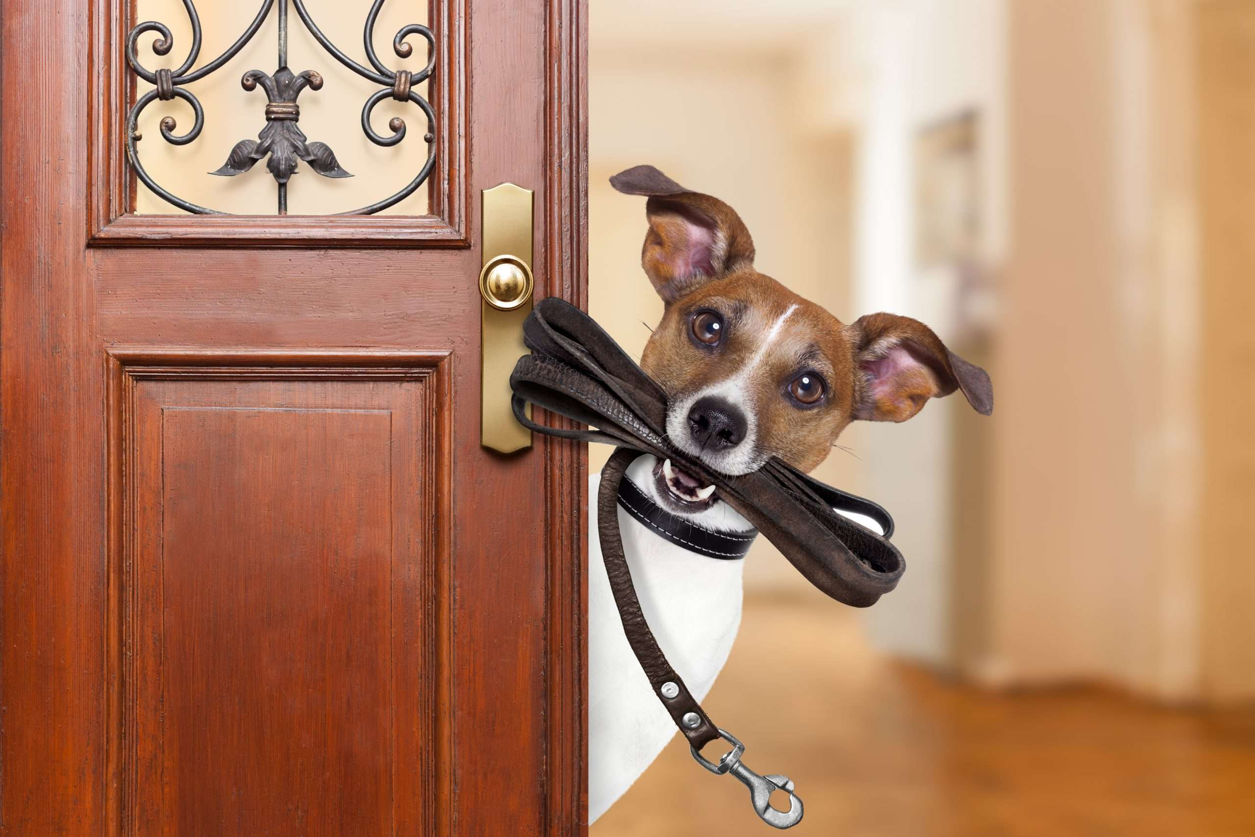 Risks of starting a dog walking business – Be careful!